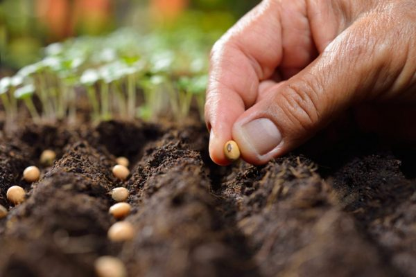 seeding 2